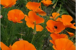 Wek je tuin tot leven op de Levende Tuinen-dag!