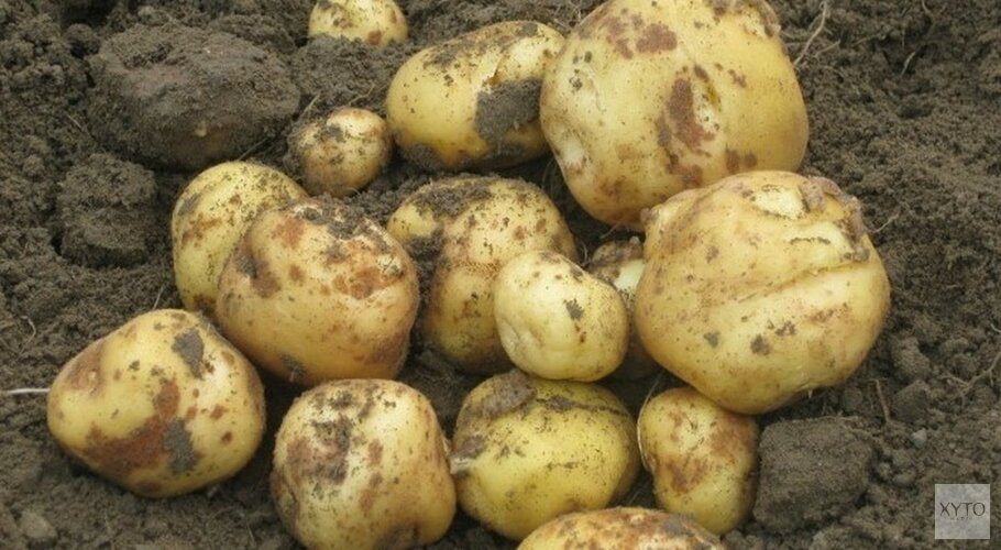 Verloren oogst Opperdoezer Ronde door slecht voorjaarsweer