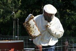 Bijen in het middelpunt in het Rundveemuseum op 5 en 12 augustus