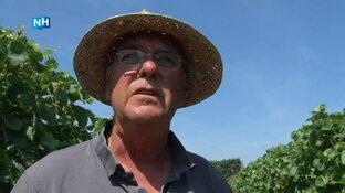 """Wijnboer Siem dolgelukkig met warmte in provincie: """"Druiven voelen zich thuis"""""""