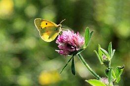 Macrofotografie en nuttige insecten in Rundveemuseum op 2 september