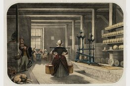 Lezing Alkmaars Historisch Café:  De geschiedenis van de Noord-Hollandse melkveehouderij