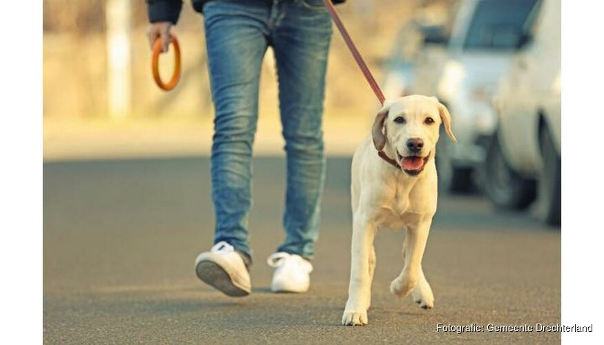 Regelmatig klachten over hondenpoep in gemeente Drechterland