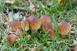 Ken jij de paddenstoelen?