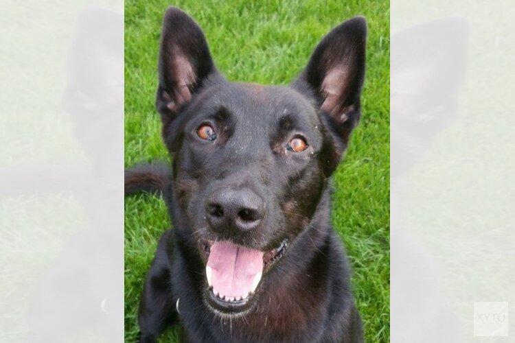 Man aangehouden met hulp van politiehond Dubh