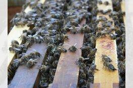 Lezingavond Bijen bij ziek en zeer