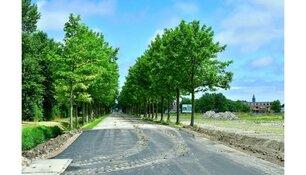 2e fase preventieve kap bomen Raadhuislaan
