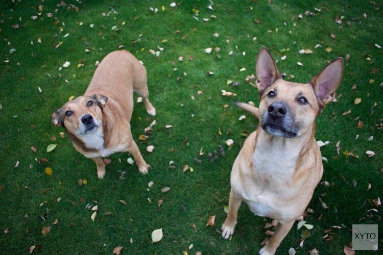 Meerdere vrijwilligers in touw om afgebrande hondenopvang te herstellen