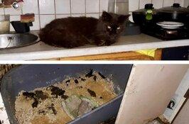 Dierenbescherming redt twintig katten uit zwaar vervuilde woning