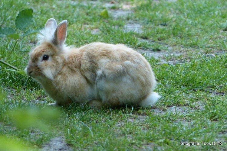 Presentatie over de verwaarloosde konijnen bij IVN