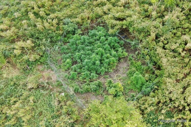 Politiedrone vindt goed verstopte hennepplantage in Lutjebroek