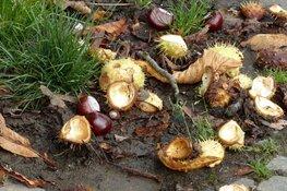 Ontluikende herfst in de Suyderbraeck
