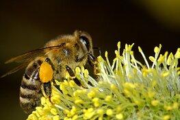 Gemeente Hoorn en Stichting Stadslandbouw ondertekenen Nationale Bijenstrategie
