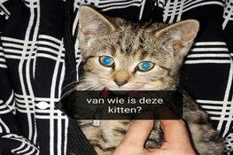Kittens aangetroffen in berm: getuigen gezocht