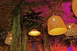 The Bamboo Room is een tropische verrassing op de Rode Steen