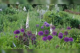 Wek je tuin tot leven op de Natuur- en Levende Tuinen-dag!