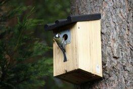 Hoe je met een (gewonnen) vogelhuisje een eikenrups bestrijdt