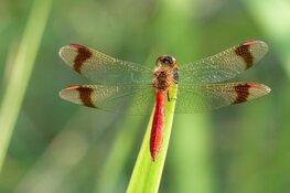 Zomerexpositie vlinders en libellen