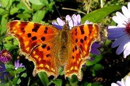 Vlinders in de tuin speurtocht