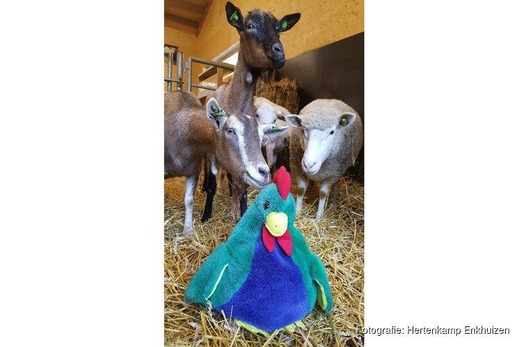Kaatje kip in de kinderboerderij voor dreumes